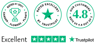 TrustPilot Review Dutch-Bulbs.Com