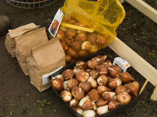Bulbs and Plants on Sale - Special Offers Online