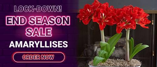 Spring Flowering Bulbs and Tubers