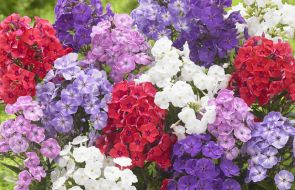 Bare-Root Perennials and Potted Plants