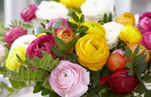 Summer Flowering Bulbs and Tubers