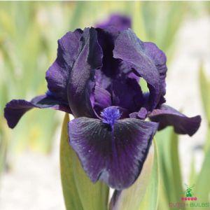 Iris Pumila Michael Paul